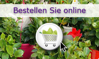 Cultivating Quality Plants - Bestellen Sie online