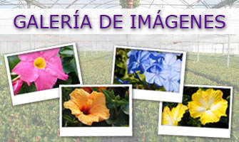 Galería de imágenes - Cultivating Quality Plants