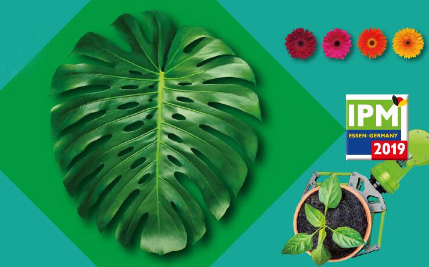 Marcas CQ Plants