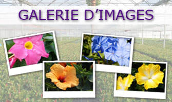 Galerie d'Images – Cultivating Quality Plants