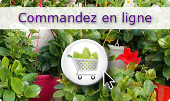 Cultivating Quality Plants - Commandez en ligne