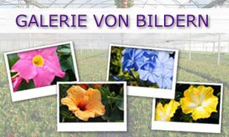 Bildergalerie - Cultivating Quality Plants