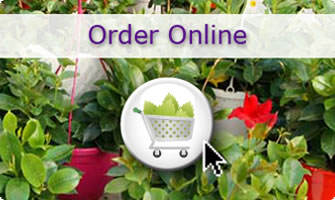 Cultivating Quality Plants - Order Online