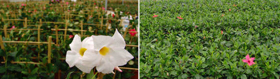 Cultivating Quality Plants